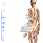 Google Body Maps – Cruise around the lower intestines, surf the stomach acid waves or follow the neurone pathway!